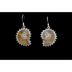 Ammonite Earings
